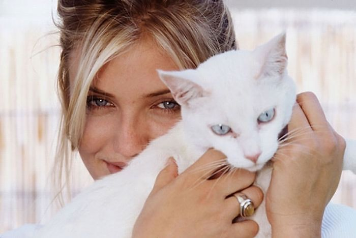 Famous-people-and-their-cats-59894ec184e74__700.jpg